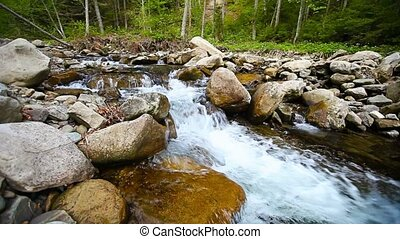 Forest stream - panning