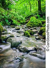 Forest stream running over mossy rocks