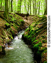Forest stream - a small stream that runs through the woods