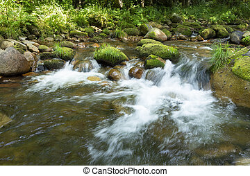 Forest stream with green vegetation in the river banks and rocks covered with moss.