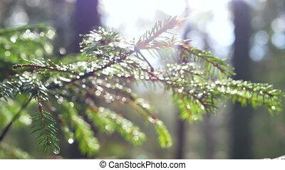 Forest sun branch spring - Enchanting sun rays beautifully...