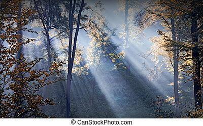 forest sunbeams