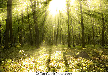Forest sunlight  - Fairytale forest sunlight and shadows