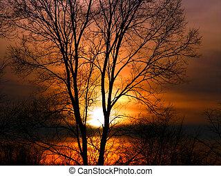 Forest Sunset Landscape Illinois - Blazing orange colors of...