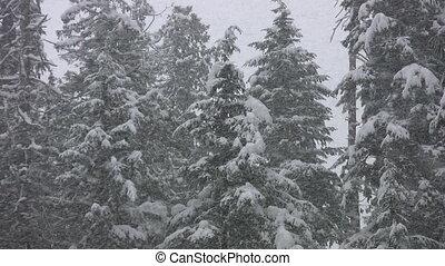 forest., tempête neige