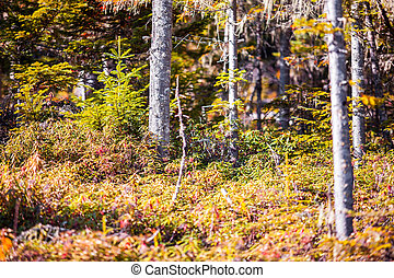 Forest thicket in autumn. Closeup details.