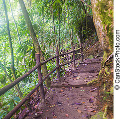 Forest track and stairway