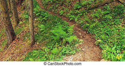 Forest trail background