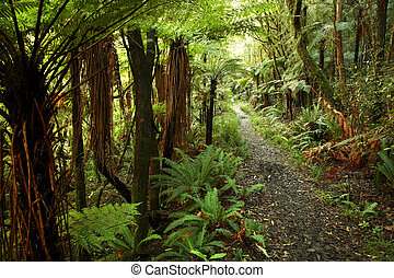 Forest - Trail in lush green tropical forest