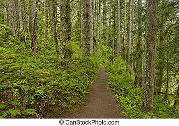 Forest trail in Silver Falls State Park Silver Falls State...