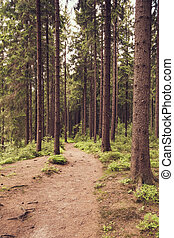 Forest trail in summer II