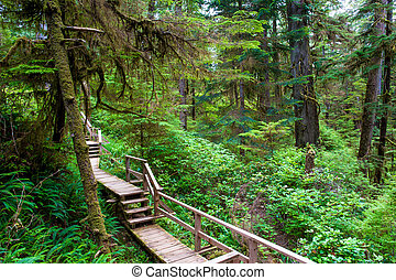 Forest trail on Vancouver island - Forest trail on Vancouver...
