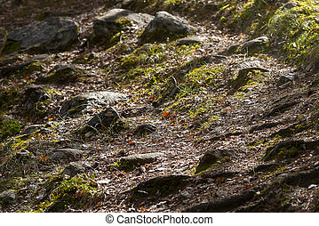 Forest trail over rocks, stones and green grass in early spring