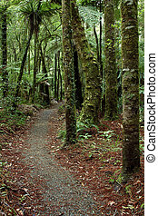 Forest trail - Walking trail in tropical forest