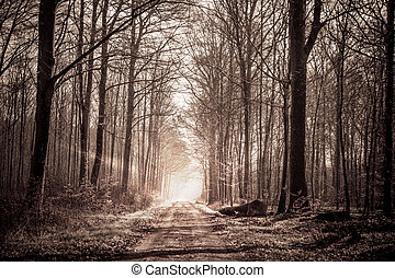 Forest train in sepia colors