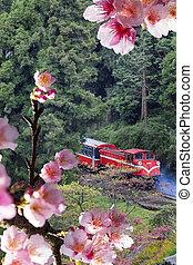 Forest train on railway with sakura
