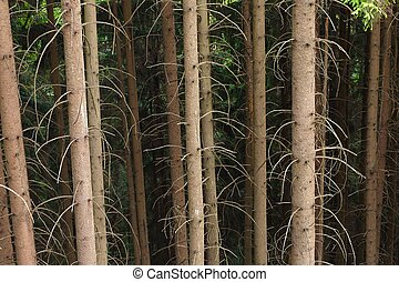 Forest tree trunks