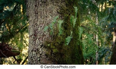 Forest Tree With Ferns Growing Off It - Closeup of old...