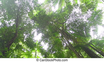 Forest trees and green leaves - A medium shot of forest...