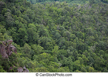 forest trees background - jungle nature green tree on the mountain top view , forest landscape scenery of river in southeast Asia tropical wild