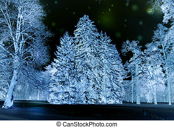 Forest trees covered snow at night in winter. Fantastic Fairytale