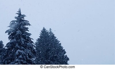 Forest Trees In Heavy Snowfall