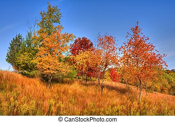Forest Trees in High Dynamic Range - Trees in Autumn Colors...