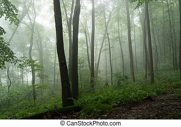 Forest Trees in the Summer Mist