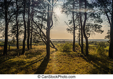 Forest trees in the summer season. Forest glade surrounded by trees. Early sunset in the background. Nature background concept.