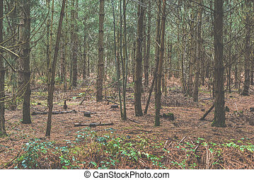 Forest trees landscape in a coniferous woodland scene with tall trees and no people