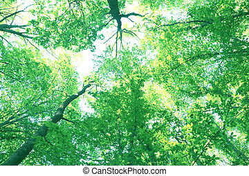 forest trees, look up, sunshine