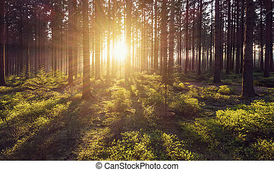 forest trees nature green wood sunlight view - Bright...