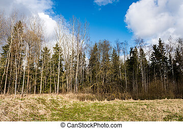 forest trees on bright blue sky