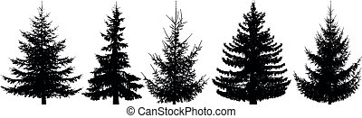 Forest trees set. Isolated vector silhouette. Christmas tree, fir-tree, pine, pine-tree, Scotch fir, cedar