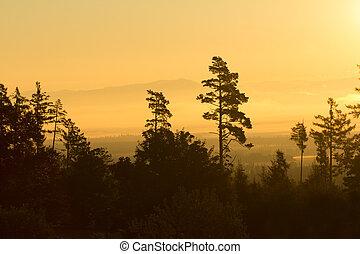 forest trees silhouette in orange sunrise