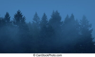 Forest Trees Silhouettes In Mist - Cedar trees in heavy mist...