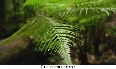 Forest trees with leaves - A macro shot of leaves and forest...