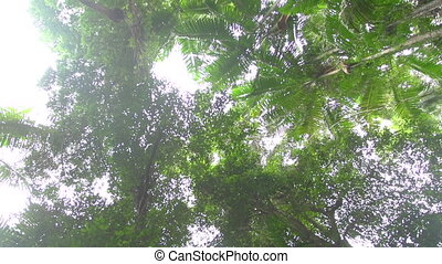 Forest trees with sun rays shot - A worms eye view shot of...