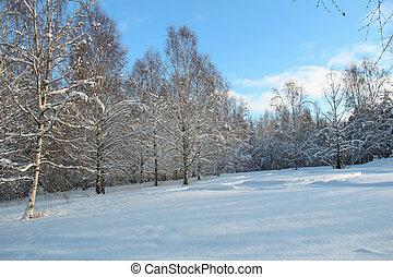 forest., trilhas, esqui, prado