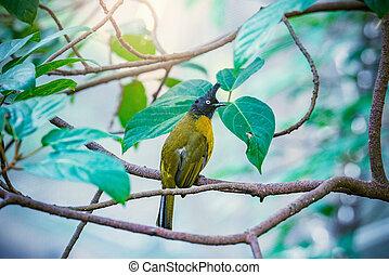 forest., tropical træ, fugl, branch