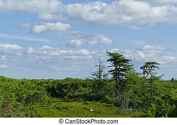 forest tundra landscape on a sunny day