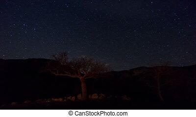 Forest under a starry sky. Timelapse.