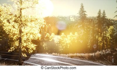 Forest under Sunrise Sunbeams - pine forest under sunrise...
