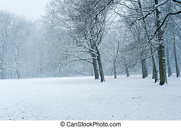 Forest under the snow in winter