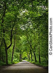 forest., verde, estrada