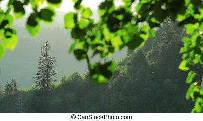 forest - evening in the forest
