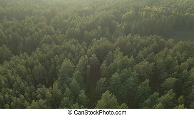 forest., view., антенна, сосна