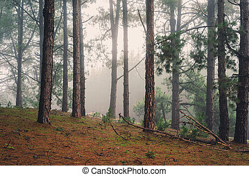 Forest Walk - Adelaide Hills, South Australia