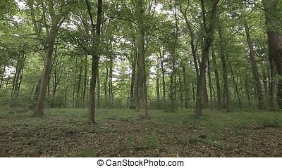 Forest Wilderness Landscape - Forest wilderness landscape...