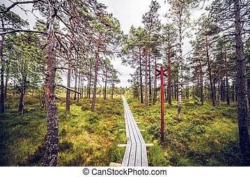 Forest wilderness with a wooden trail